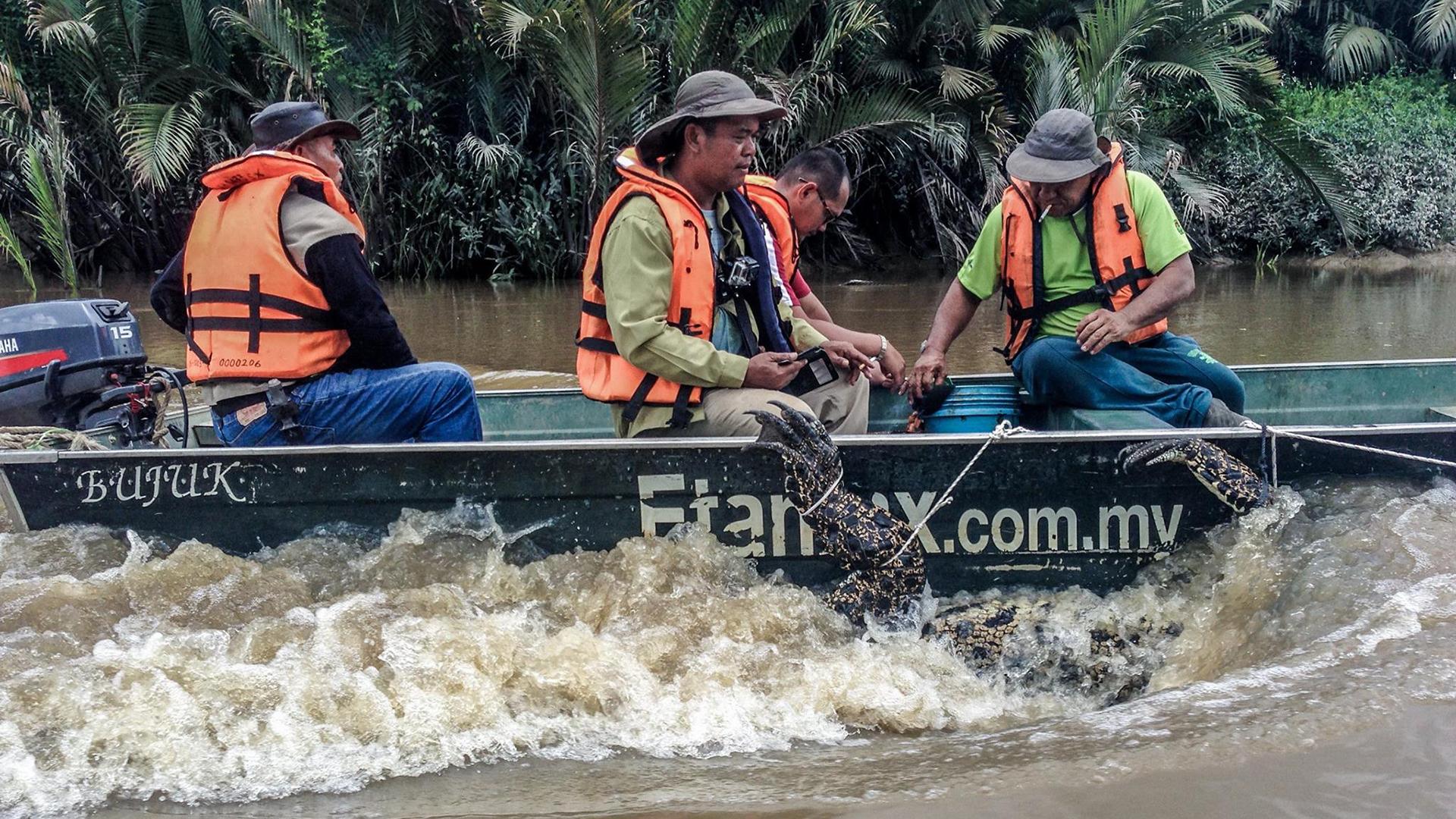 Nove Borneo: paradiso da proteggere