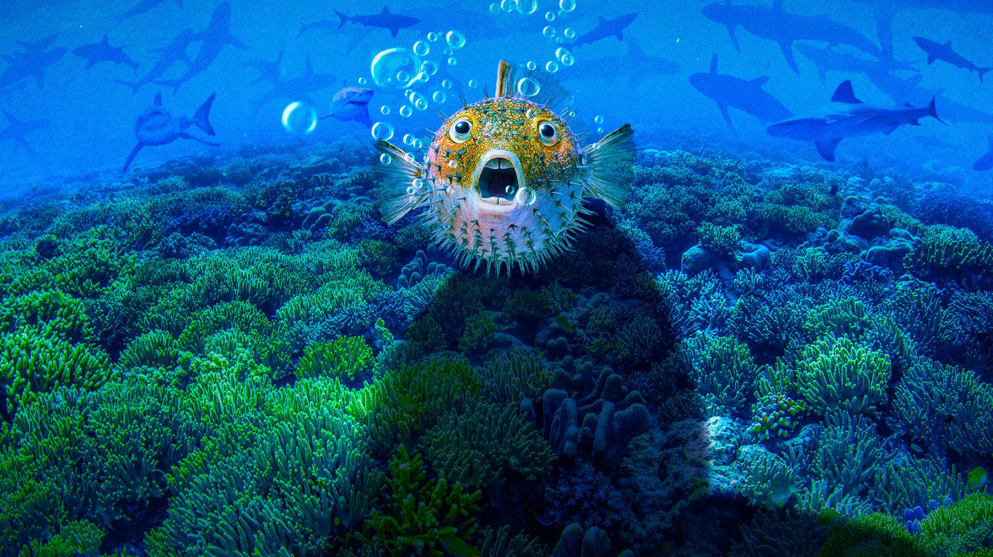 sito di incontri Blowfish