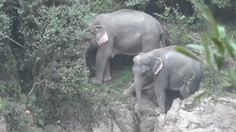 dolor perineal cuidador del zoológico